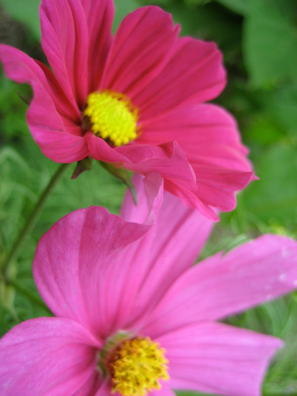 traum-pink
