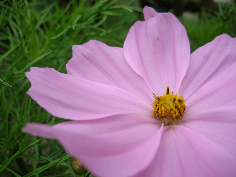 traum-pink2
